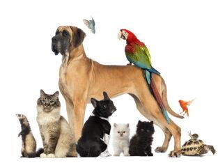 Инструктор кинолог,выгул, передержка собак, котиков и других животных.