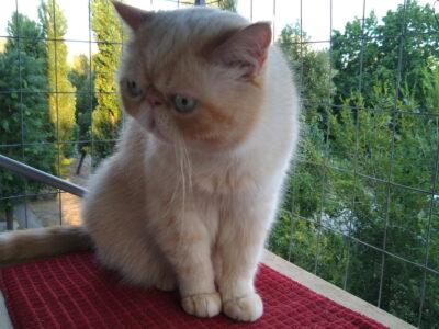 Клетка на окно для кота. «Броневик» Днепр