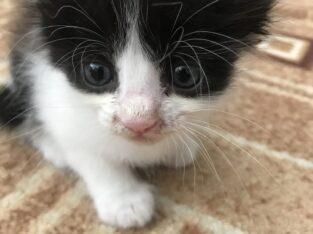 Котятки ,отдам в хорошие руки