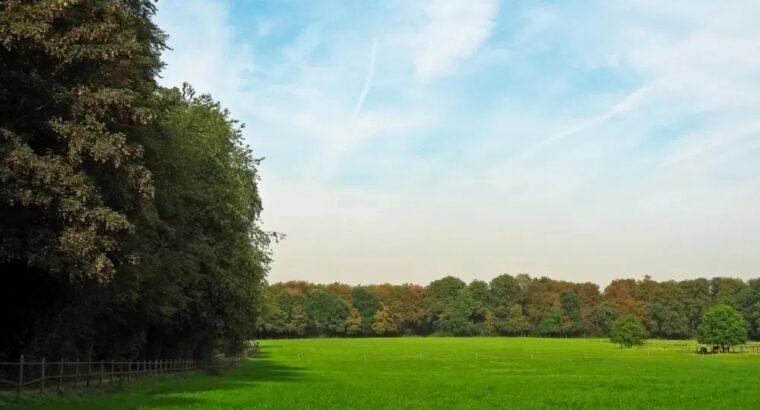 Поиск партнеров и инвесторов для вложений в сельское хозяйство