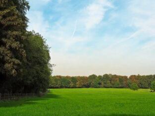 Ищем партнеров и инвесторов для вложений в сельское хозяйство