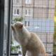 Балкон для выгула кошек, по почте. «Броневик» Днепр.
