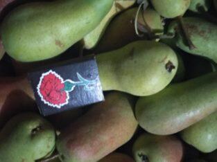 Продам грушу: киргизка зимняя и талгарская красавица