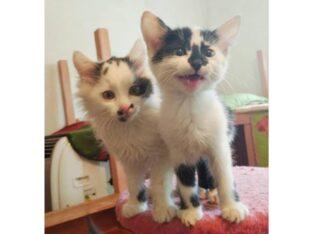 Пятнистый котенок ищет семью (отдам даром)