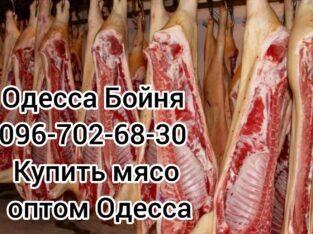 Мясо свинины цена