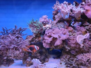 Заказать торговый аквариум для устриц и лобстеров от компании Retailaqua.