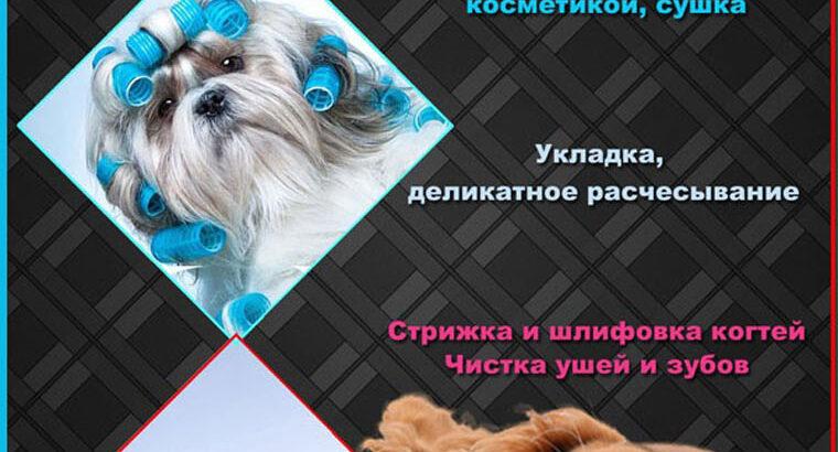Грумер , стрижка собак , Харьков , Песочин