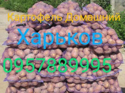 Картофель Домашний Харьков Залютино