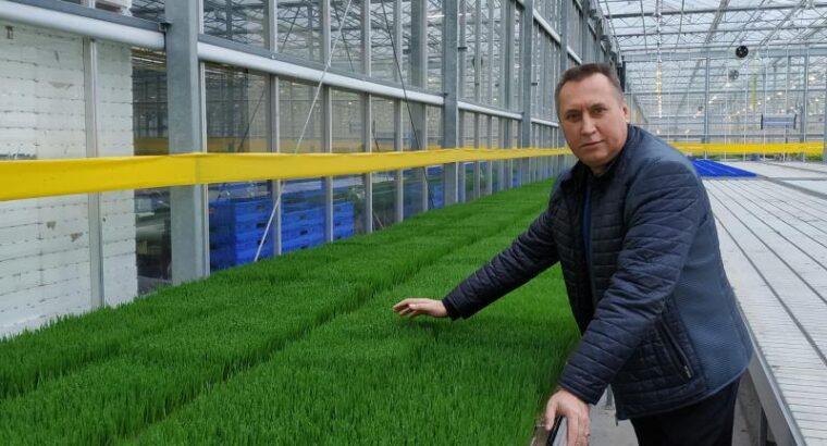 Продам Витграсс — сок из ростков пшеницы для вашего здоровья